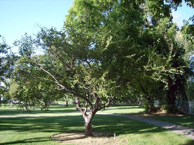 Arboretum Index A H